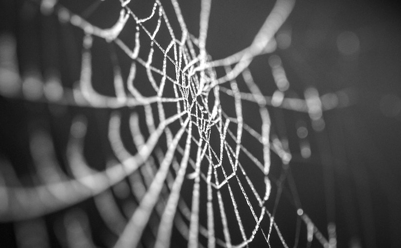 Close up of an empty spider web.